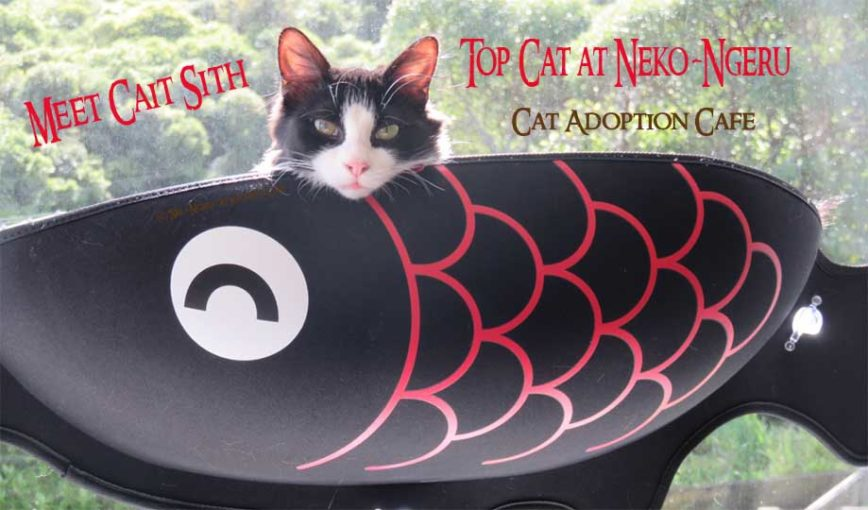 Neko-Ngeru Cat Adoption Cafe, Meet Cait Sith Cat