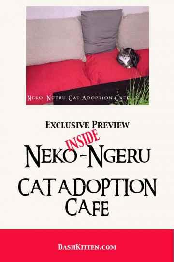 NEKO-NGERU CAT CAFE