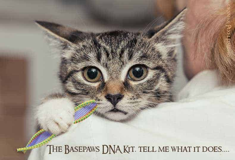 Cat DNA Kit Image