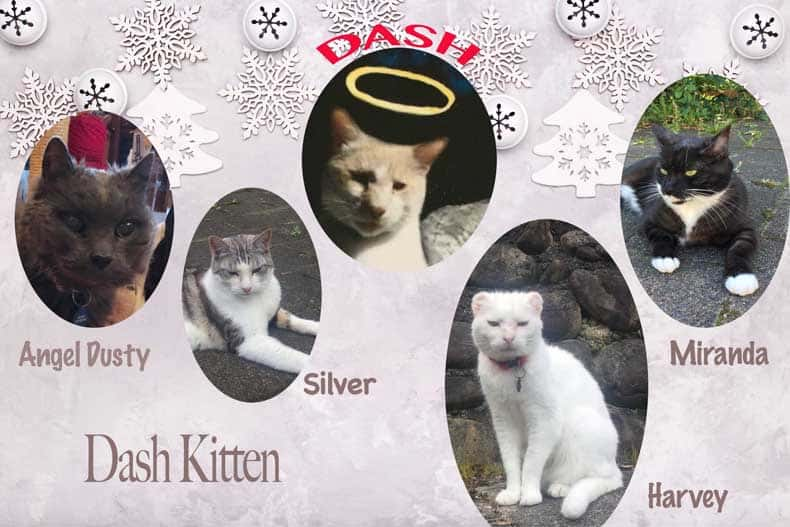 Dash Kitten Christmas Graphic Small