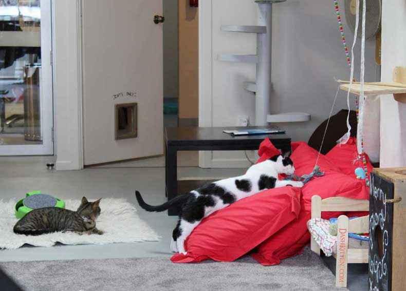 Neko-Ngeru Dash Kitten Image