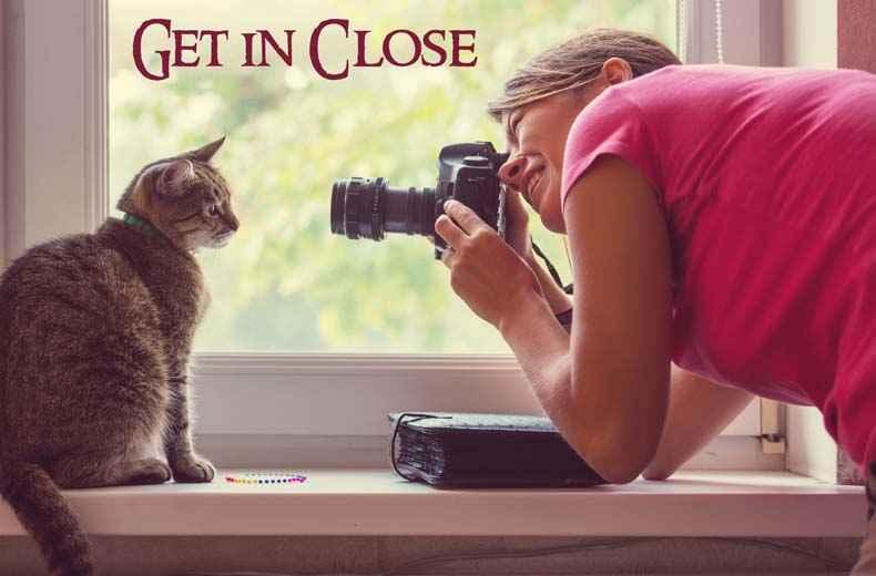 Pet Movie Post at Dash Kitten