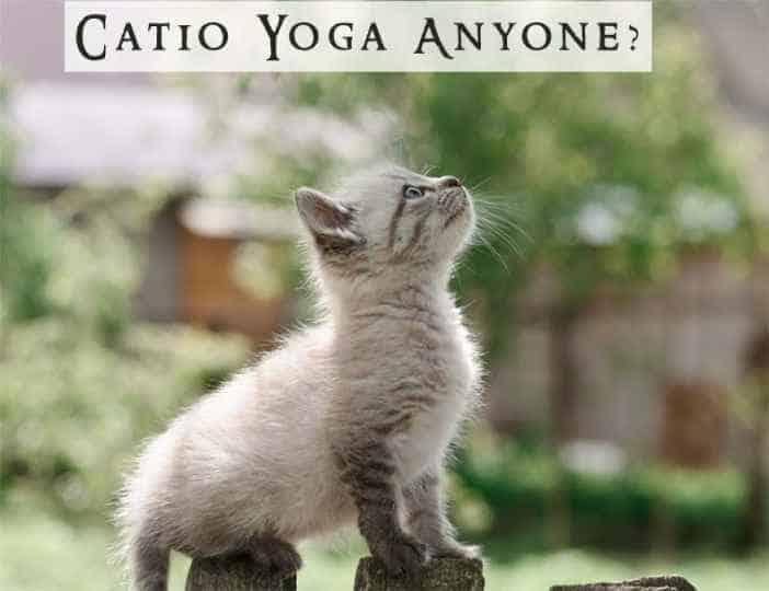 Cat Door Blog Post