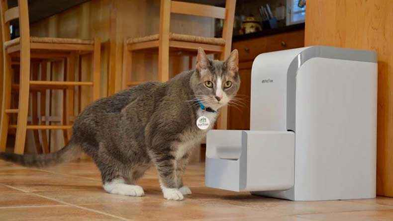 Internet of Things Cat