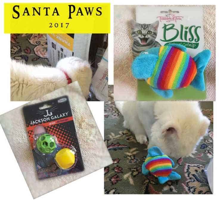 Dash Kitten Santa Paws Report 2017