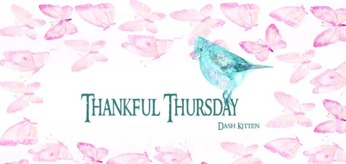 Thankful Thursday with Dash Kitten