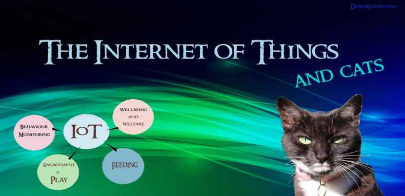 The Internet of things and cats