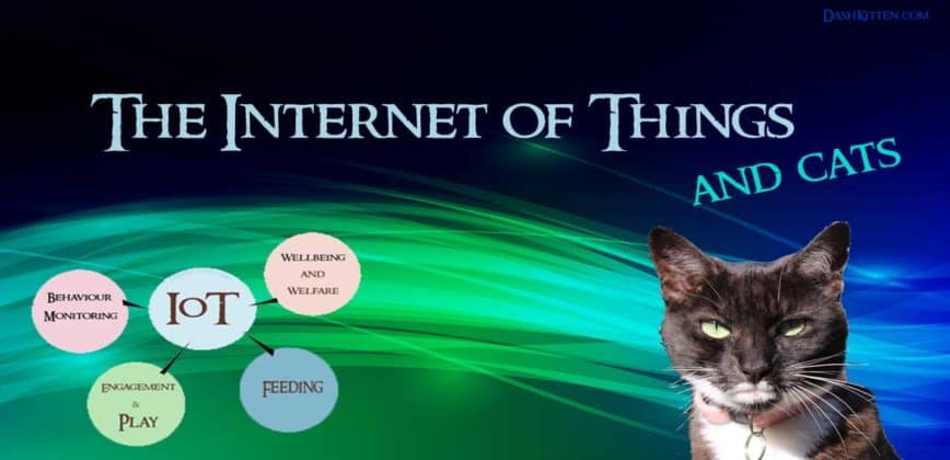 The Internet of Things vs Cats Who Wins?