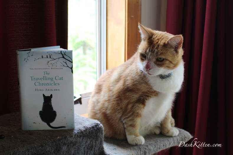 Jack the solar eczema cat
