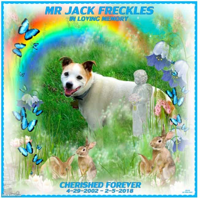 Mr Jack Frackles