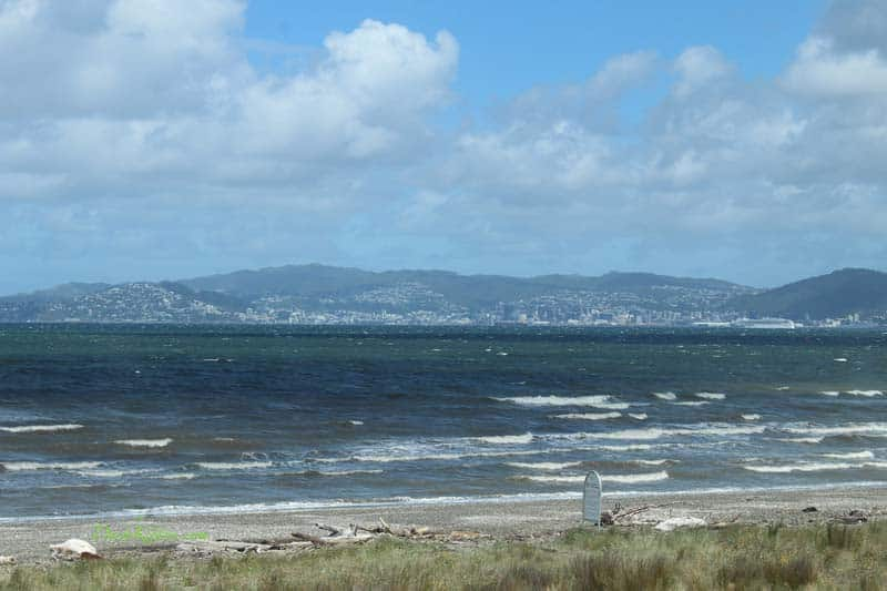 Wellington view at Dash Kitten blog