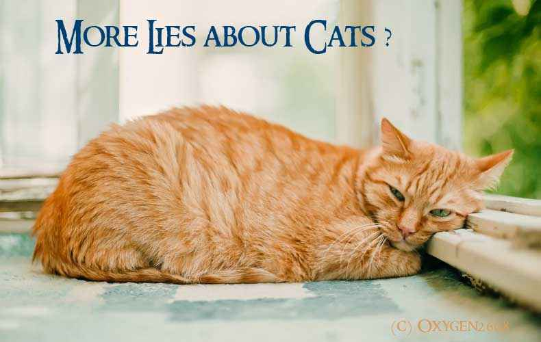 Damned Lies and Statistics about Cats