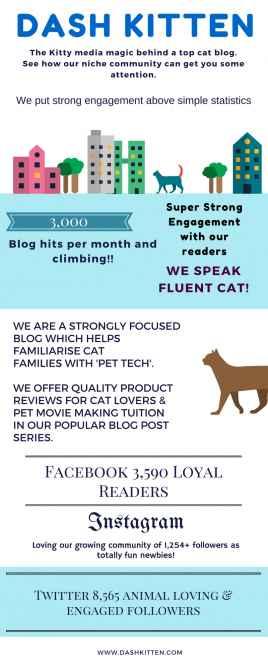 Dash Kitten Media Graphic