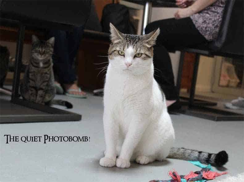 Neko Ngeru Cat Cafe