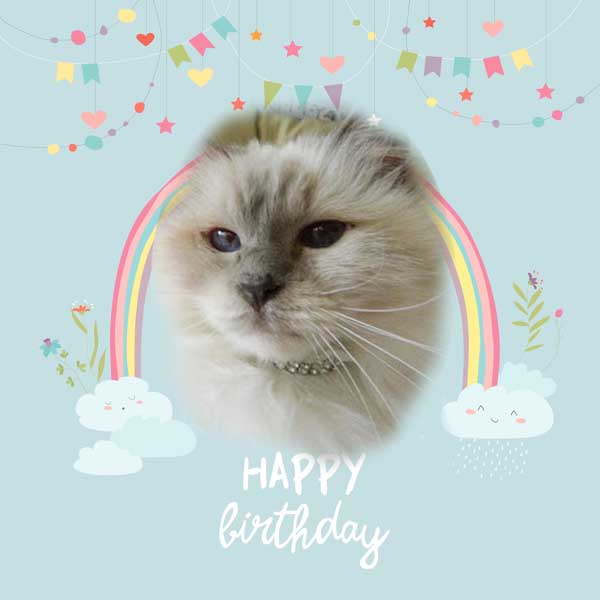Happy Birthday Allie from Dash Kitten