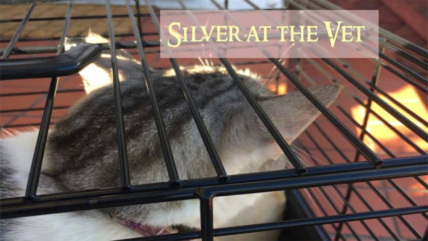 Silver At The Vet