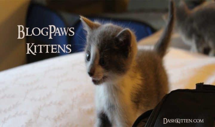 BlogPaws Kittens AvertingCATastrophe