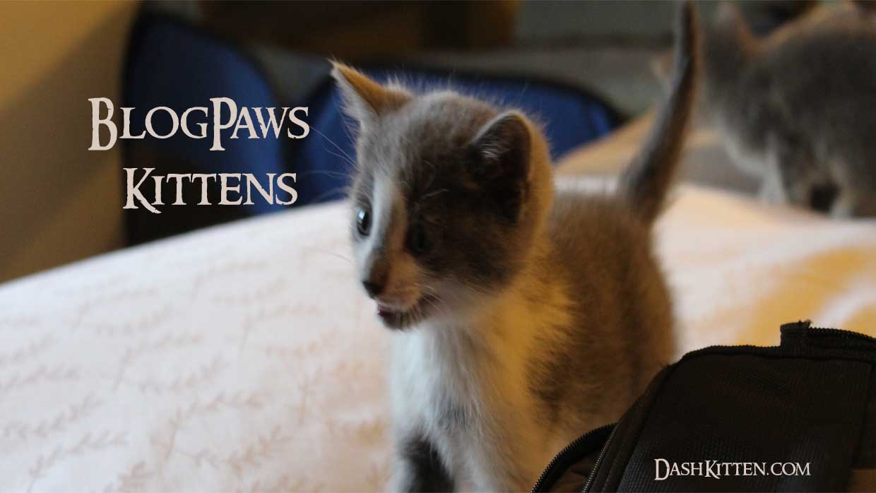 BlogPaws Kittens AvertingCATastrophe