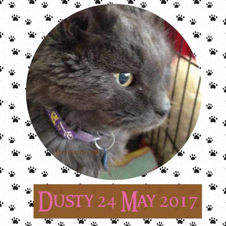 Dusty Memorial Image 2018