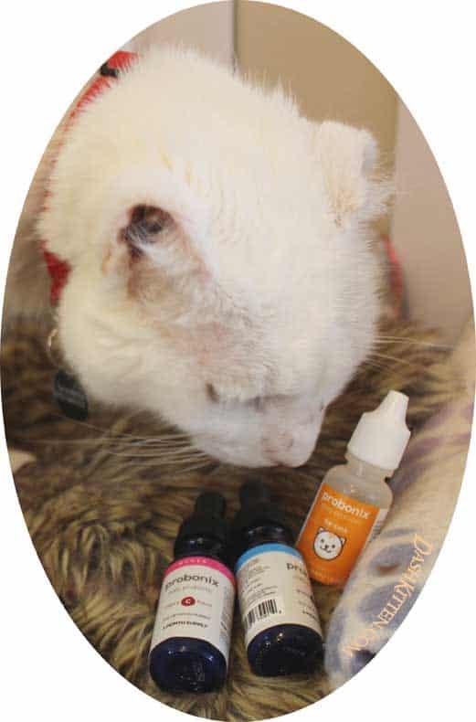 Probonix best feline probiotic