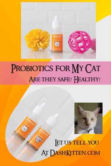 Probiotics for my Cat header