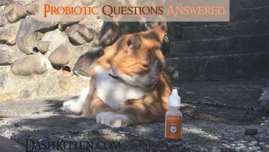 Your Questions About Probiotics and What They Do