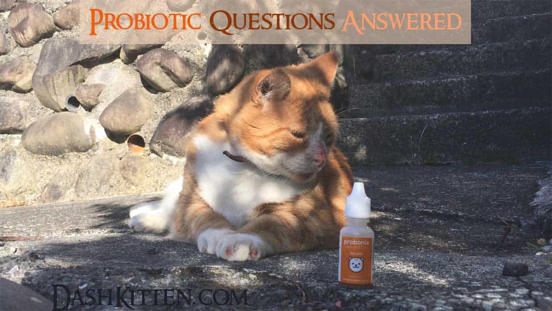 Probonix Probiotics and Jack the Cat