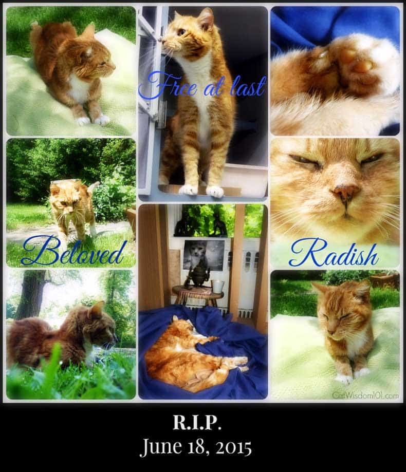 Radish the Cat 18 June Memorial