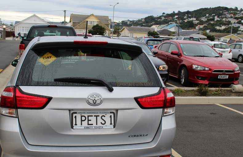 Cat Number Plates Pets