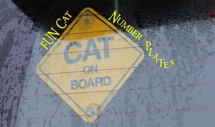 Cat Number Plates Header