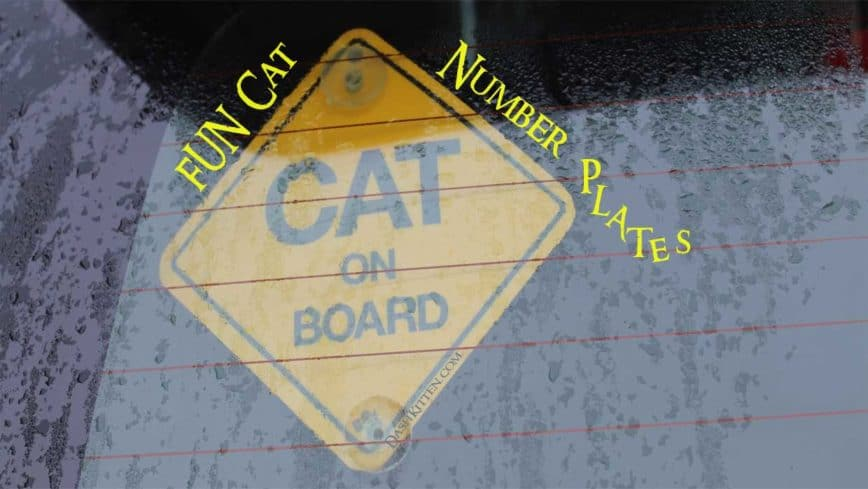 Fun Cat Number Plates