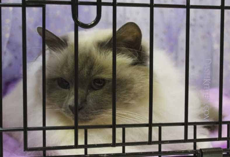 National Cat Show