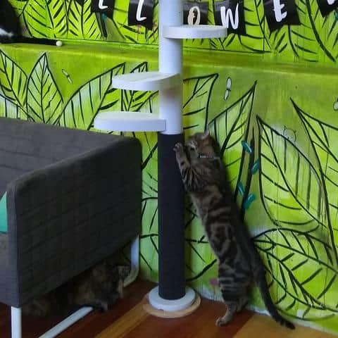 Monkee Tree Scratch Post