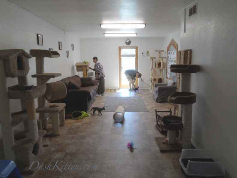 Contra Costa Cat Room