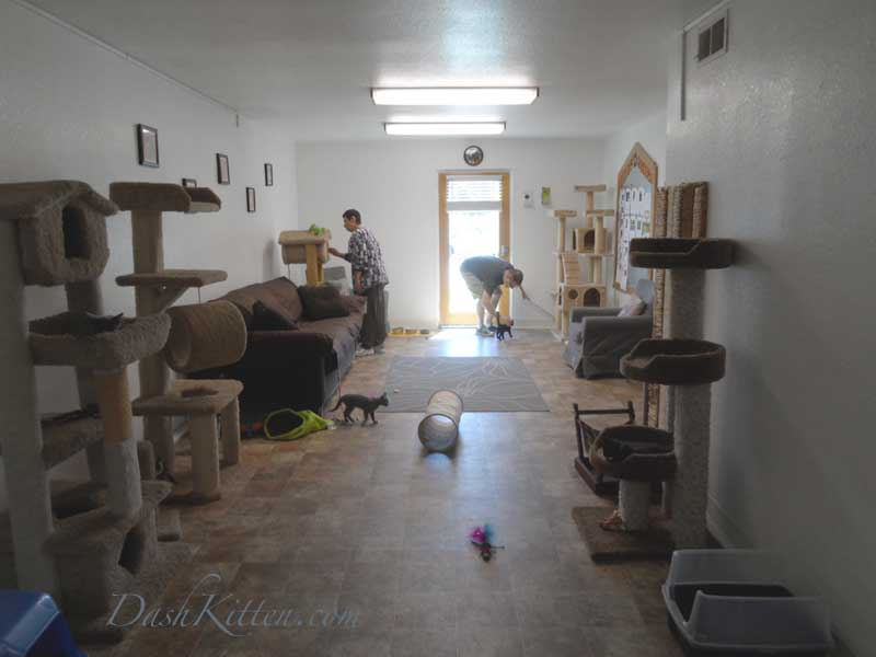 Kitty Corner Kittens at Contra Costa Humane