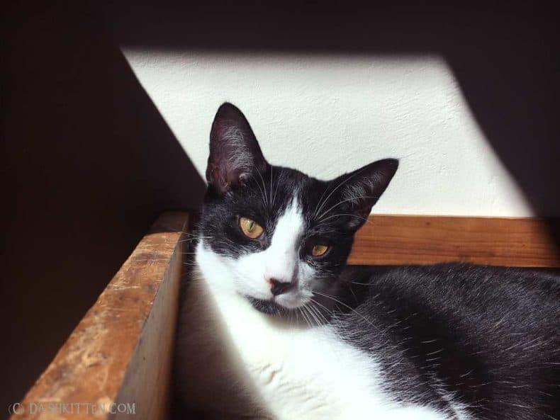 Spot in the sun Neko Ngeru Cat Adoption Cafe