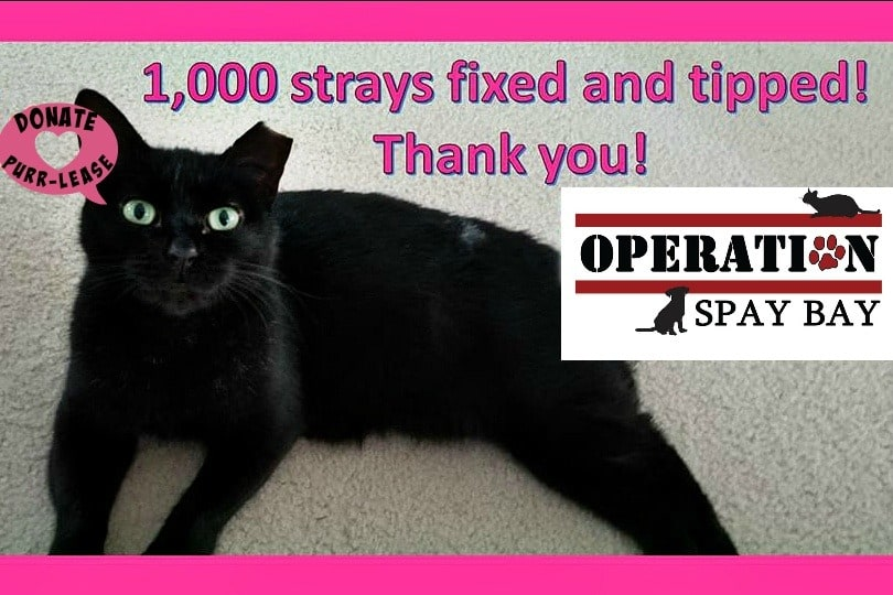#OperationSpayBay Graphic of black cat