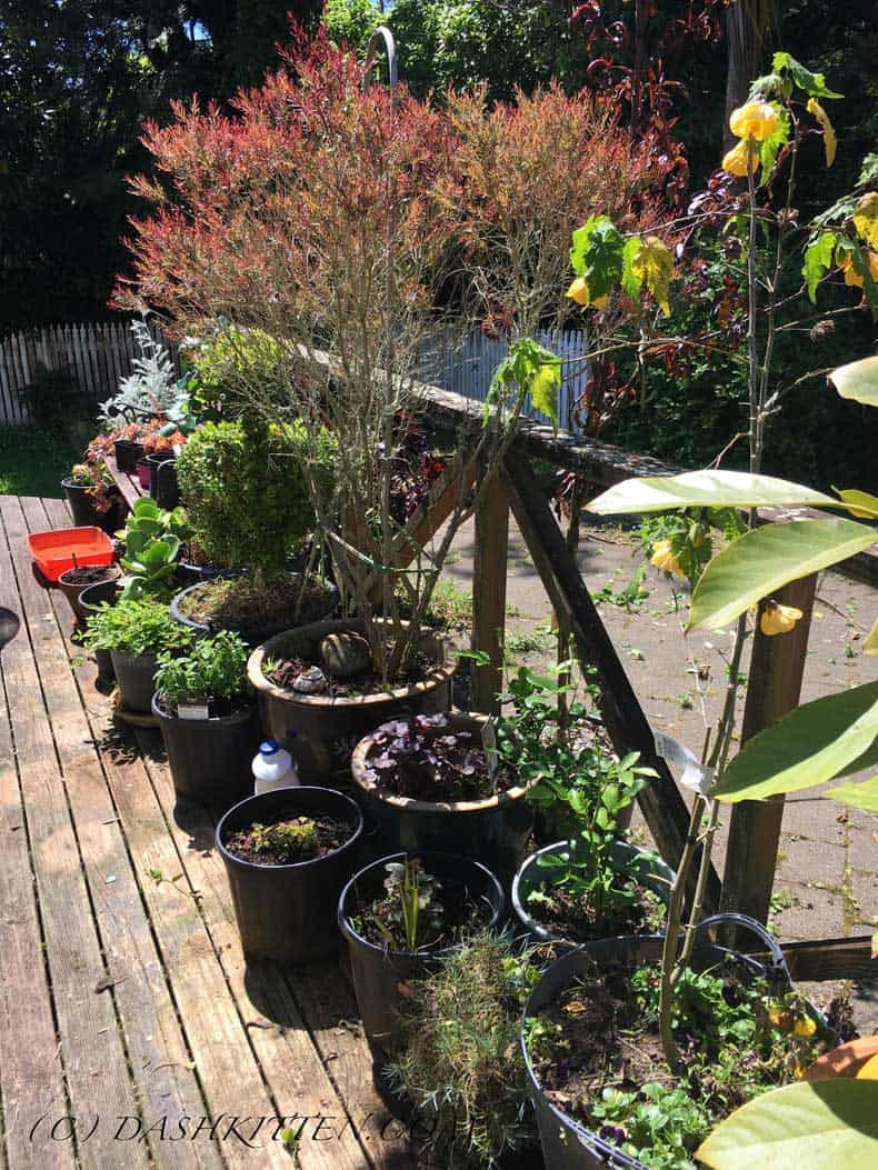 Spring is here Back Deck New Zealand