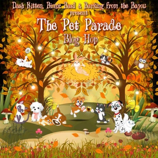 500 Pet Parade Autumn
