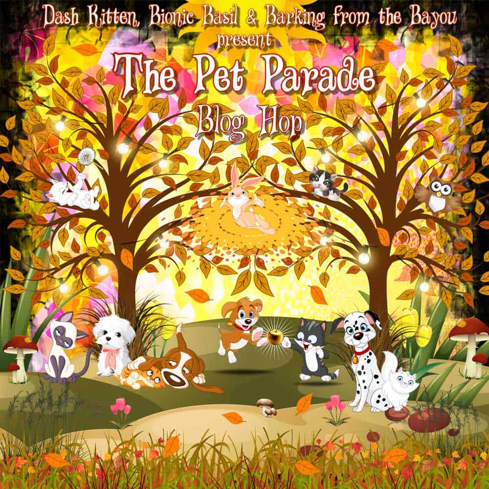The Pet parade Autumn Banner 2018 c