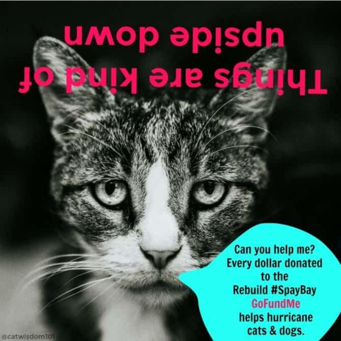 catwisdom101_sq_gofundme_spaybay