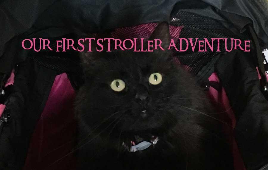 Cat Stroller adventure
