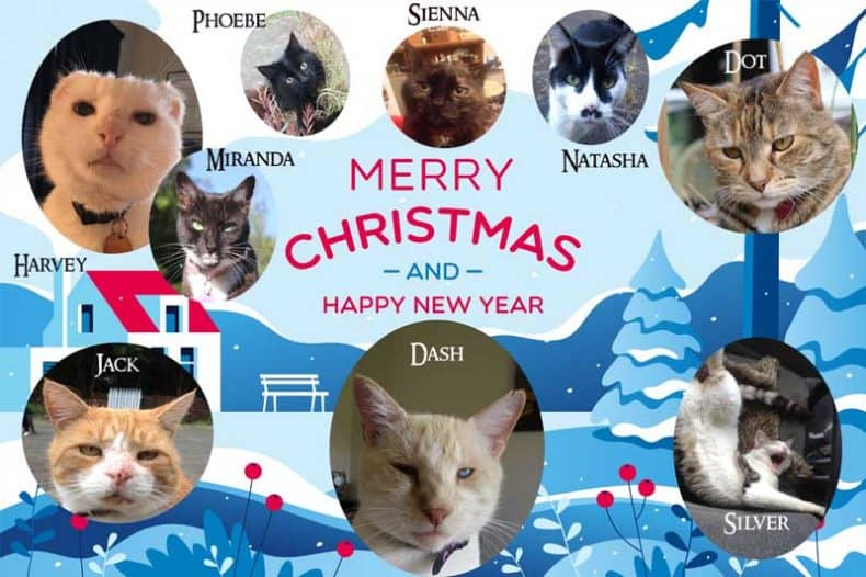 Christmas card for Dash Kitten
