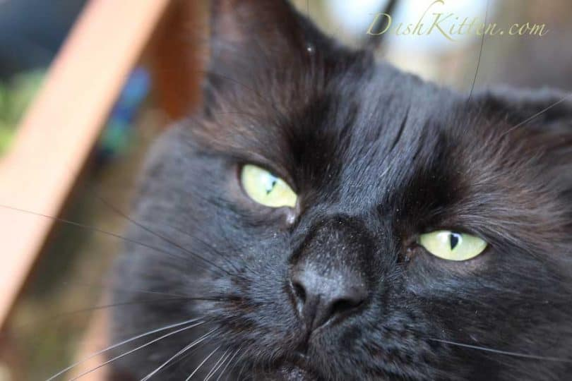 Dark Cat Selfie Phoebe