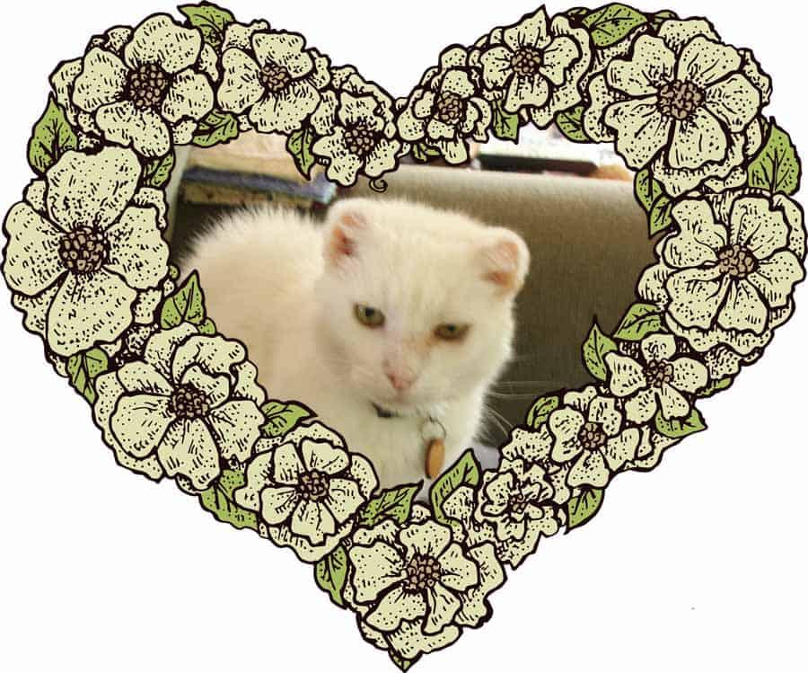 Harvey in Heart Romantic Photograph in a Heart