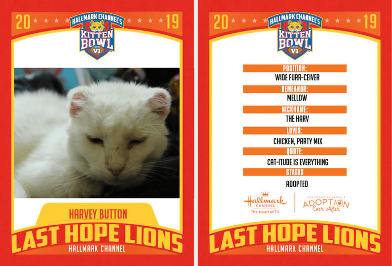 Harvey Kitten Depth of Field Kitten Bowl ID Card Photograph