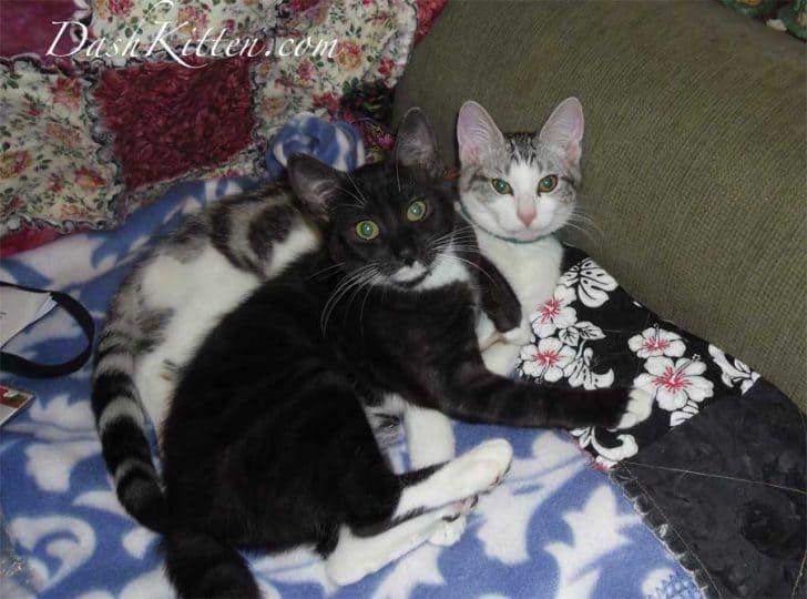 Miranda and Silver Kittens 2013 2