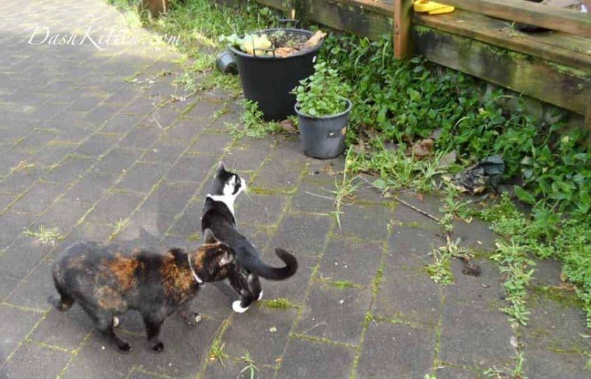 Natasha in the garden