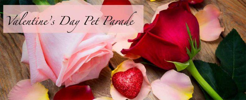 Pet Parade Valentine's Day