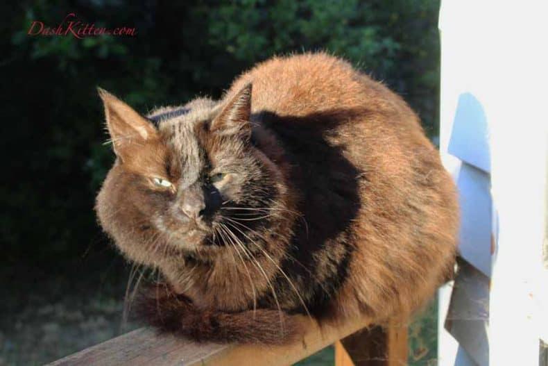 Dark Cat Full Face Sunshine